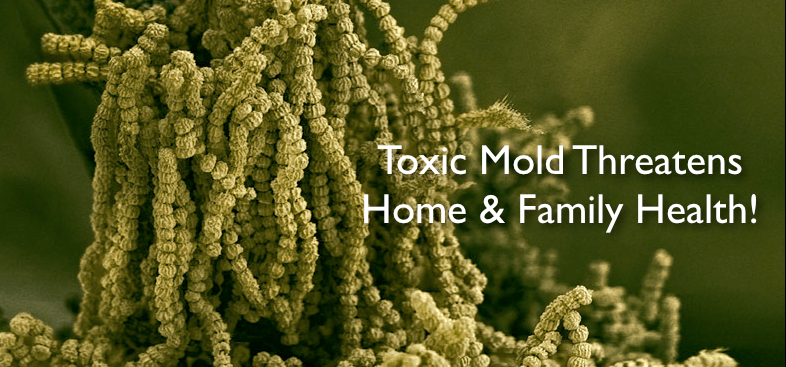 Mold Remediation Gainesville Florida