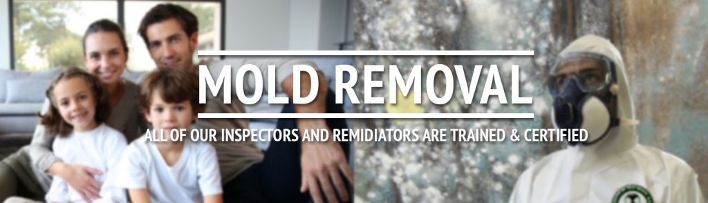 Gainesville Florida Mold Remediation Specialist