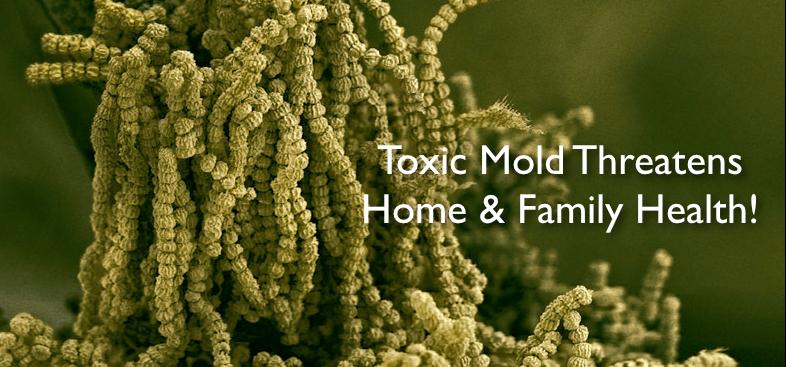 Mold Remediation Gainesville Florida