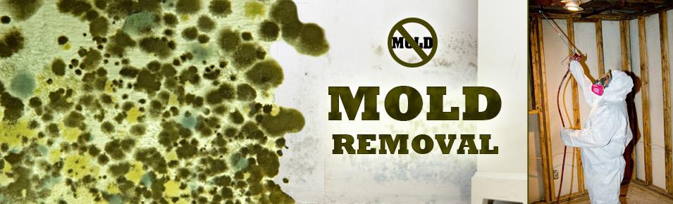 Molds Hidden Dangers