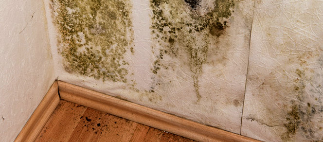 Household Mold Health Concerns