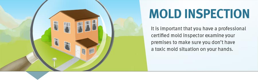 Mold Detection and Remediation