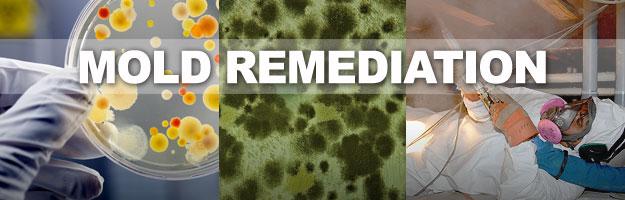 Gainesville Mold Remediation